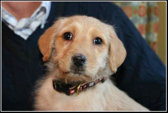 Natty Puppy Pic