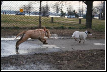 Natty Dog Park