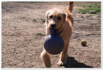 Natty Ball