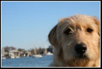 Natty Annapolis