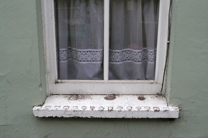Shells on Windowsill