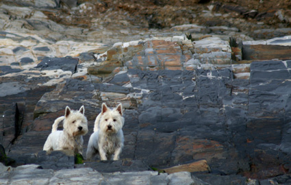 Garrylucas Beach Terriers